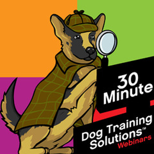 30 Min DT Solutions main logo