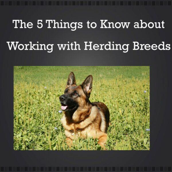 Herding-1